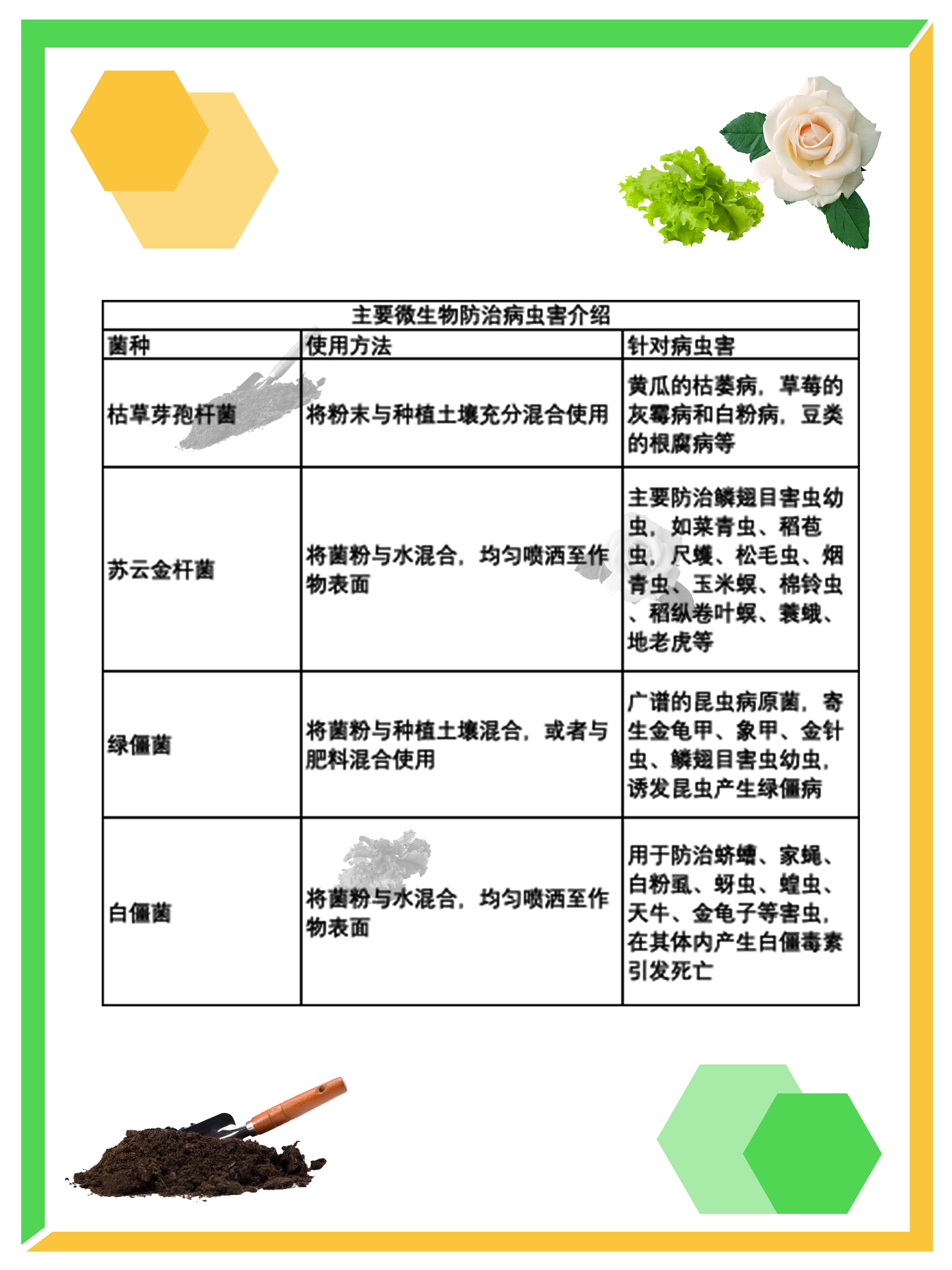 小红书菌图.jpg